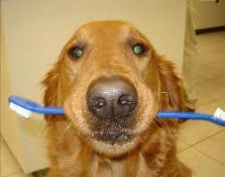 dogwith_toothbrush.jpg